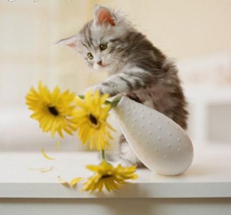 Pěkné kočičky